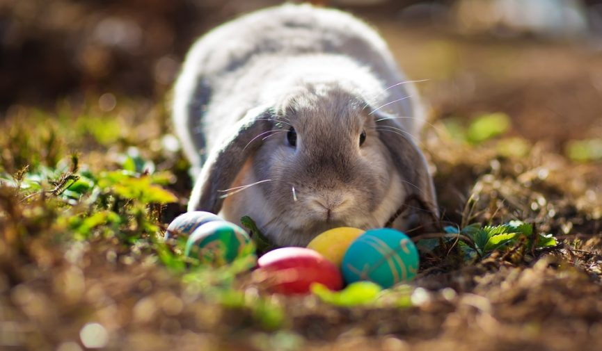 Your Health Hub Easter Bunny